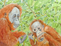 Mother-and-infant-orangutan