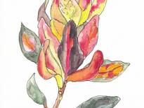 Croton-from-Fiji
