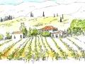 Grape Vines, Pigadakia on Zakinthos 2